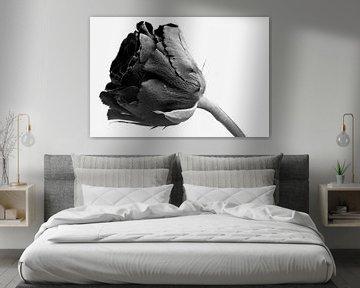 Zwarte roos op witte achtergrond van J..M de Jong-Jansen
