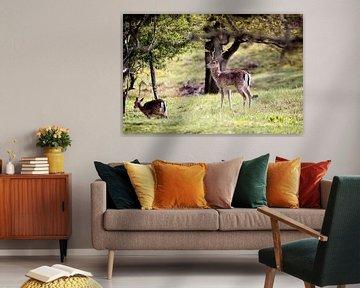 Hert in het bos van Hans van Oort