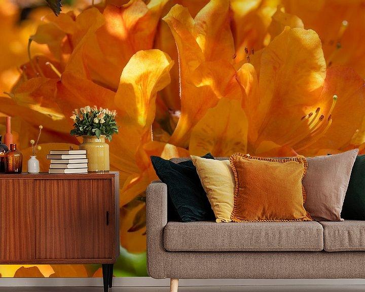 Sfeerimpressie behang: Tuin plezier met de oranje bloeiende Azalia van JM de Jong-Jansen