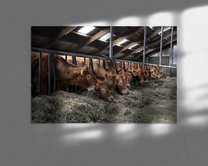 Sfeerimpressie: Koeien in de stal van FotoGraaG Hanneke