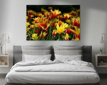 Gloedvolle tulpen
