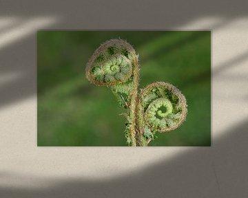 twee spiralen in de natuur