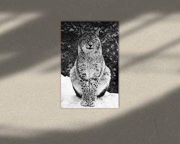 Eine stolze Schönheit Luchs sitzt volles Gesicht und starrt gerade Schwarz-Weiß-Foto von einer Katze von Michael Semenov