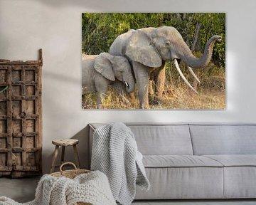 olifant met kalf, Uganda van Jan Fritz