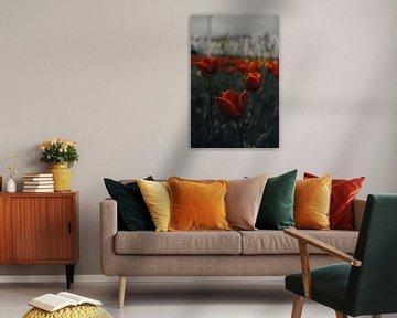 Tulipes sur Werner Lantinga