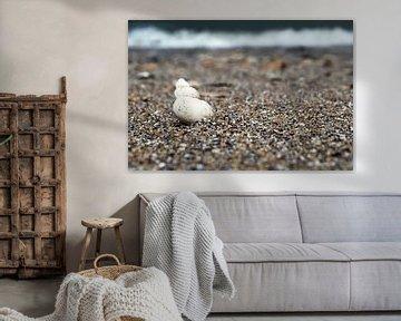 Coquillage sur la plage