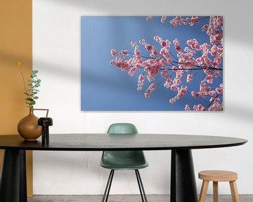 Kirschblüte, Blauer Himmel von Torsten Krüger