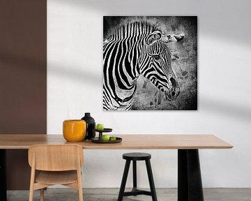 Schwarz-Weiß-Porträt eines Zebras (Mischtechnik)