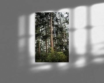 Sanftes Abendlicht durch den Wald von Holly Klein Oonk