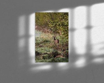 Kleiner Rehbock auf der Weldam von Holly Klein Oonk