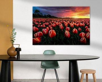 Amazing tulip sunset van Costas Ganasos