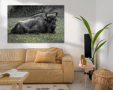 Een imposante wisent (bizon) liggend in het gras. van GiPanini