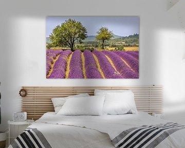 Lavendel van Antwan Janssen