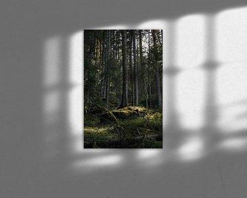 Eiland in het bos van Severin Frank Fotografie