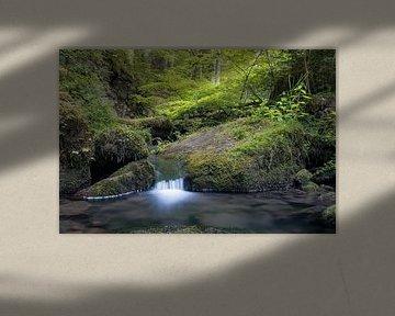 Lente Lente van Severin Frank Fotografie
