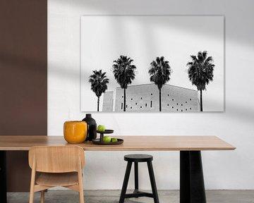 Nice palmbomen van Huib Vintges