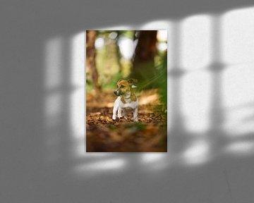 Jack Russell Terriër Puppy in het bos