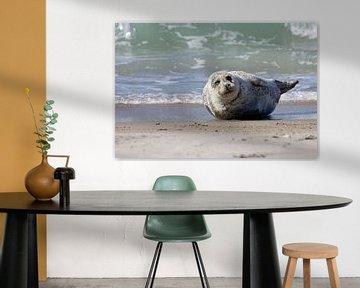 Zeehond op het strand van Düne sur Antwan Janssen