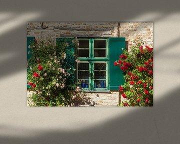 Altes Fenster mit Sommerblumen an einer Historischen Hausfassade Bei der Nikolaikirche, Rostock, Mec von Torsten Krüger
