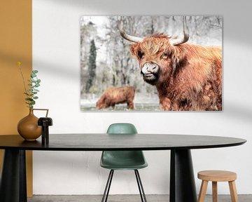 Schotse hooglander van Janine Bekker Photography