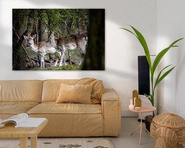 Twee herten van Janine Bekker Photography