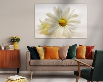 Chrysanthemenblüten - Duo von Dagmar Marina