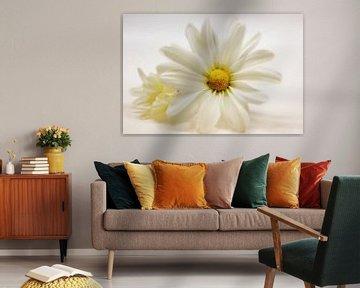 Chrysanthemenblüten - Duo van Dagmar Marina
