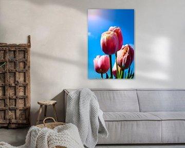 Tulpen in der Sonne von Photography by Naomi.K