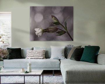 Blüte in Knospe von Saskia Schotanus