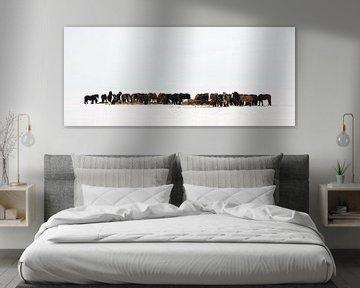 IJslandse Paarden von Menno Schaefer