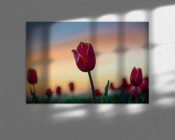 Tulpen von Joyce Leenen