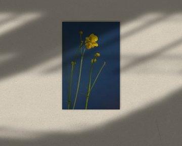 Boterbloem van Anke Winters