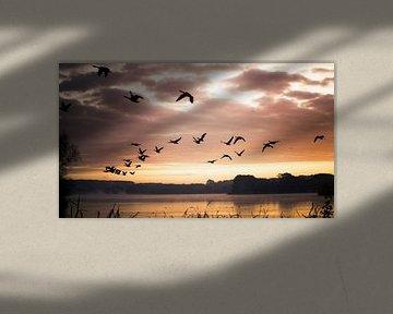 Vogels in de ochtendzon van Jonas Demeulemeester