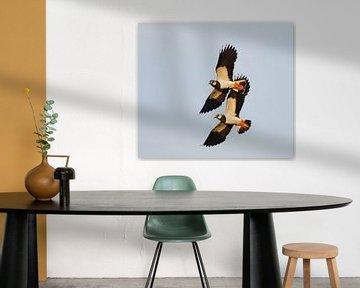 Vliegende Kieviten van Beschermingswerk voor aan uw muur