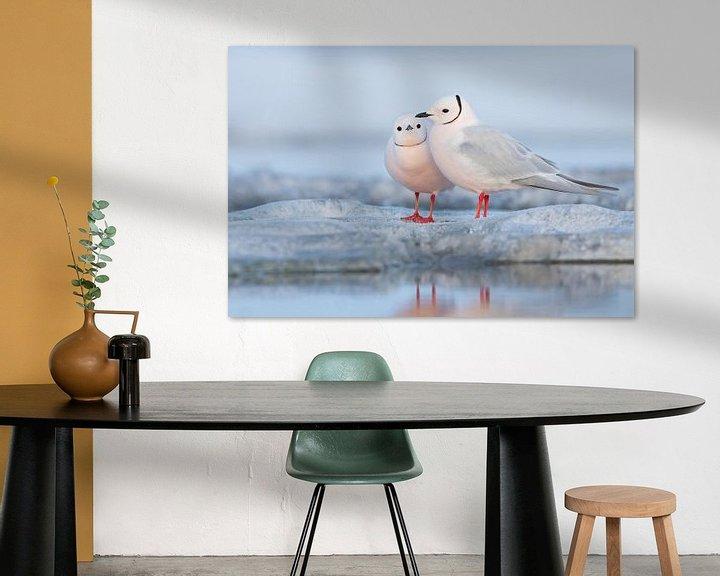 Sfeerimpressie: Ross' Meeuwen (Rhodostethia rosea) van Beschermingswerk voor aan uw muur