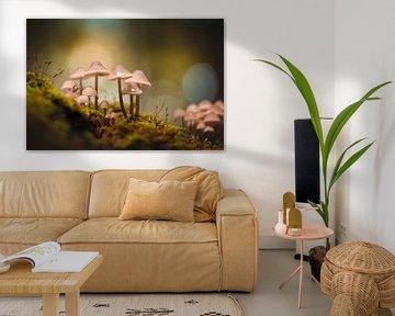 Paddenstoelen in het bos met bokeh van KB Design & Photography (Karen Brouwer)