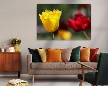 Tulpen in de Keukenhof (3) von Antwan Janssen