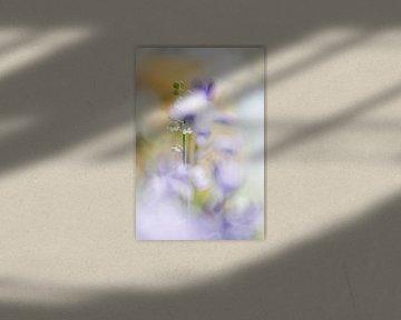 Helle Blumen von Bob Daalder