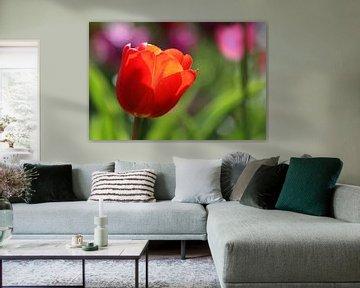 Tulpen in de Keukenhof (5) von Antwan Janssen