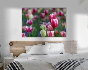 Tulpen in de Keukenhof (6) von Antwan Janssen