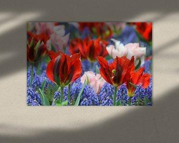 Tulpen in de Keukenhof (7) von Antwan Janssen