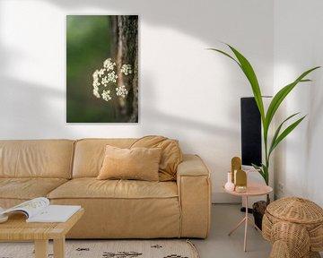 Witte schermbloemetjes van Fluitenkruid van Mayra Pama-Luiten