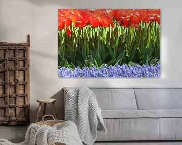 Tulpen in de Keukenhof (8) von Antwan Janssen