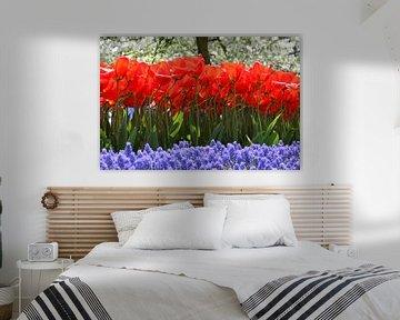Tulpen in de Keukenhof (9) von Antwan Janssen