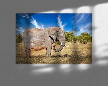 Elefant im Gras, Etosha Namibia