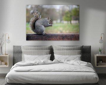 Eekhoorn in Londen von Jonas Demeulemeester