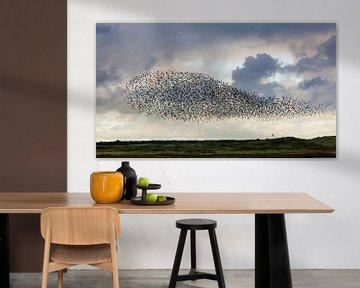 Starling-Wolke an der Mok-Bucht von Petra Borsch
