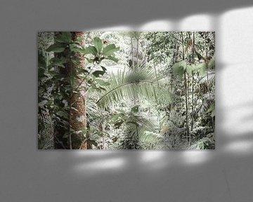 Tropischer Regenwald mit Hoffnung von DsDuppenPhotography