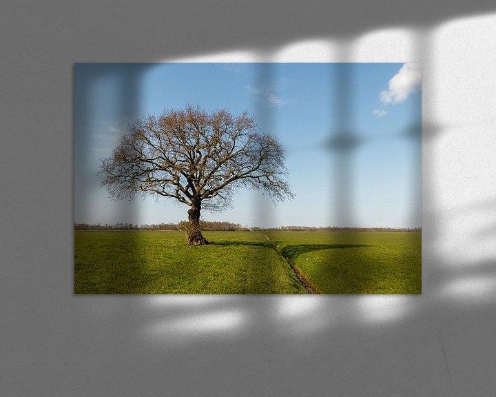 Sfeerimpressie: Gewoon een boom. van Anjo ten Kate