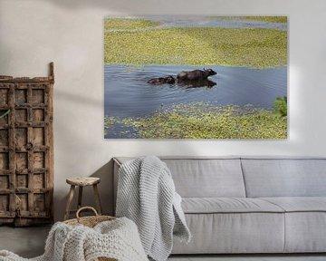 Wasserbüffel Mama mit Kind - Kuh mit Kalb von ADLER & Co / Caj Kessler
